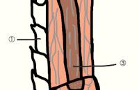 毛髪の構造とトリートメントについて。